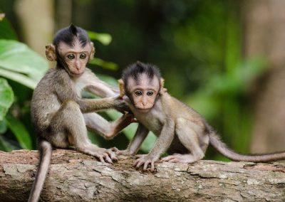 Leren van apen
